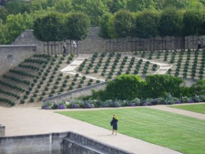 The gardens at the Royal Chateau Amboise  were designed in an English style with regularly placed and carefully manicured boxwoods as a focal point.